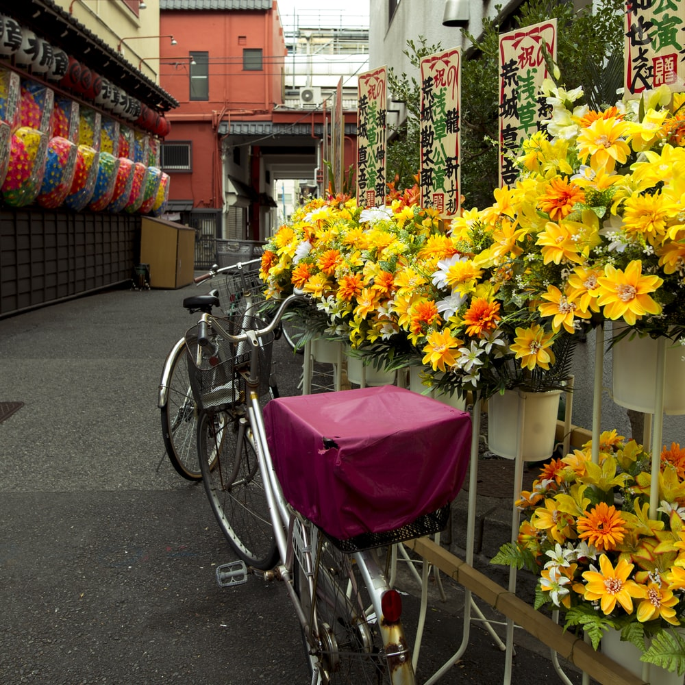 two bicycles near flowers