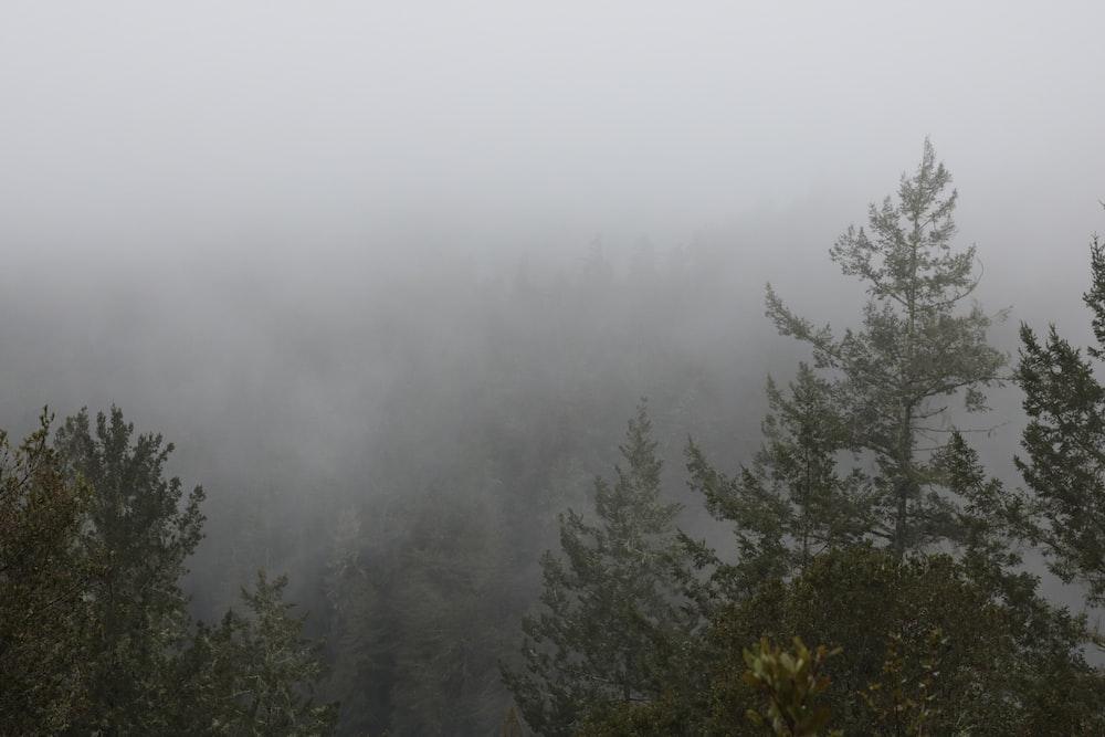 forest under fogs