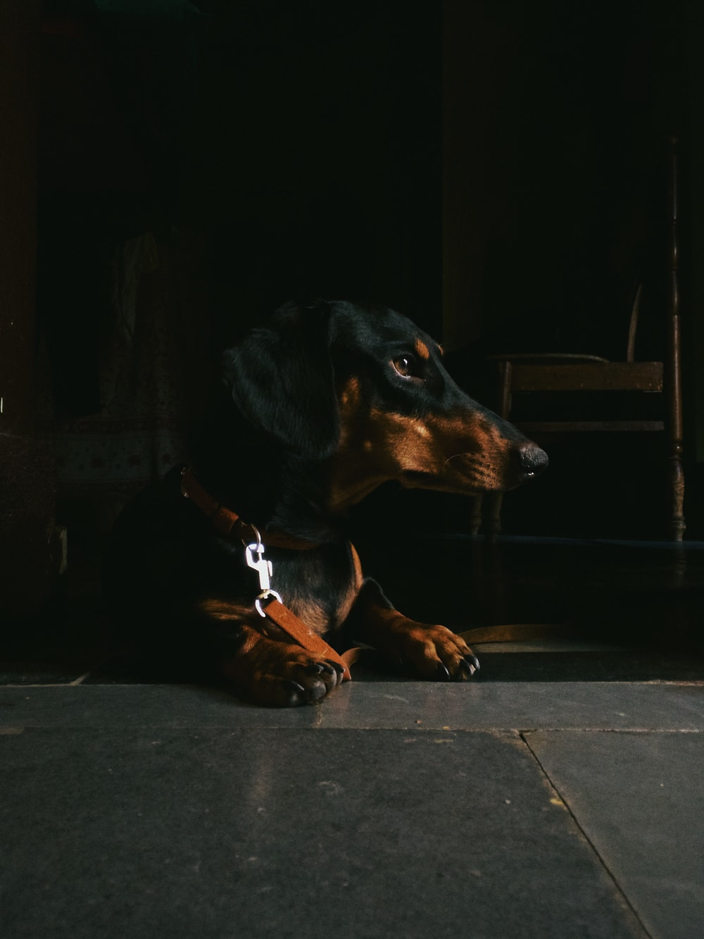 black and brown dachshund lying on floor