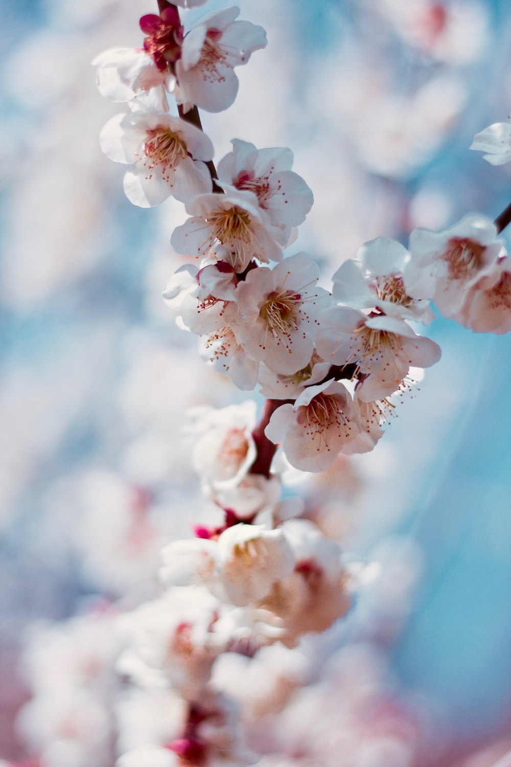 pink cherry blossom in selective-focus photography