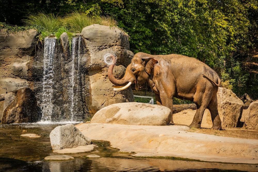 brown elephant near rock beside waterfalls