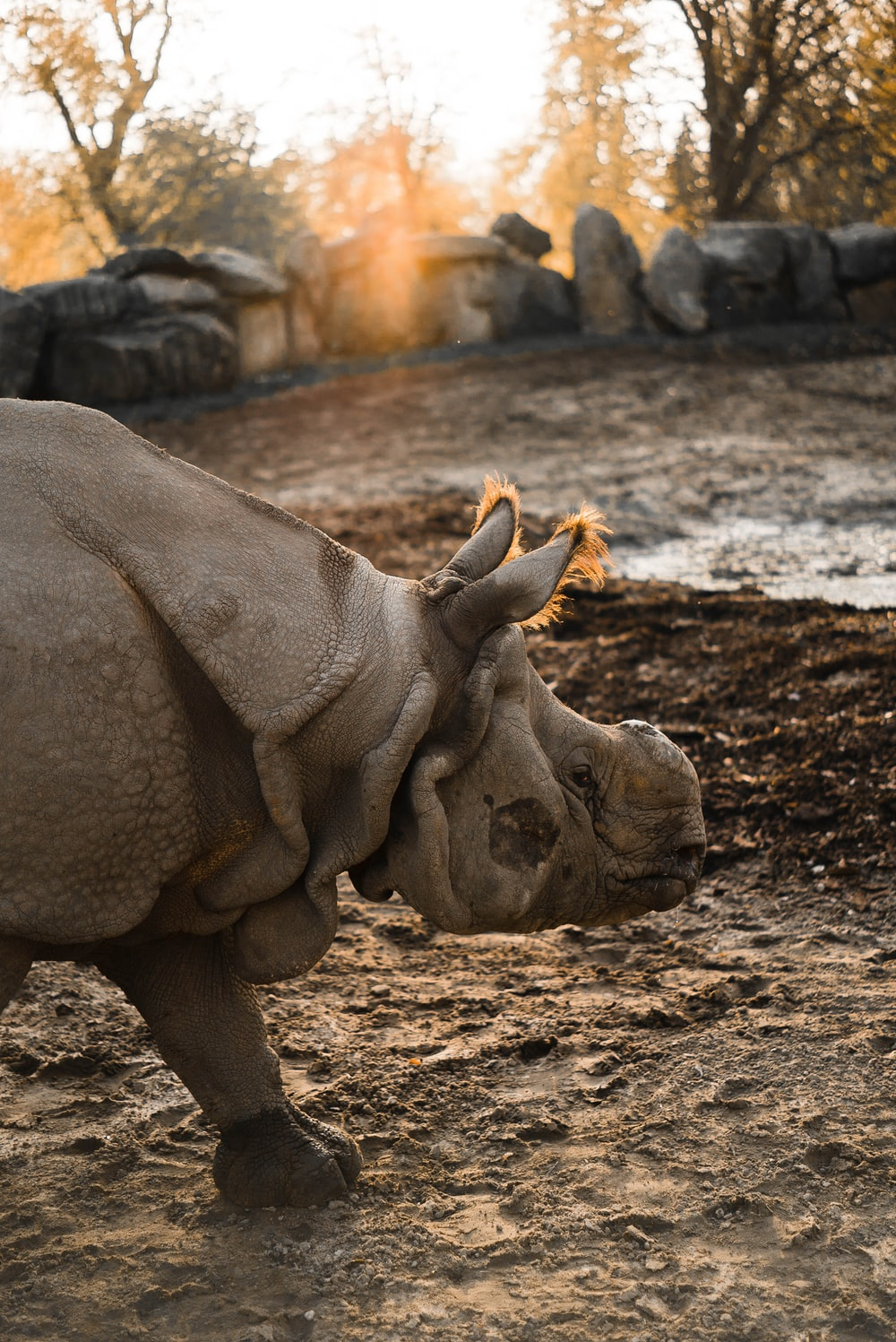 gray rhinoceros on ground