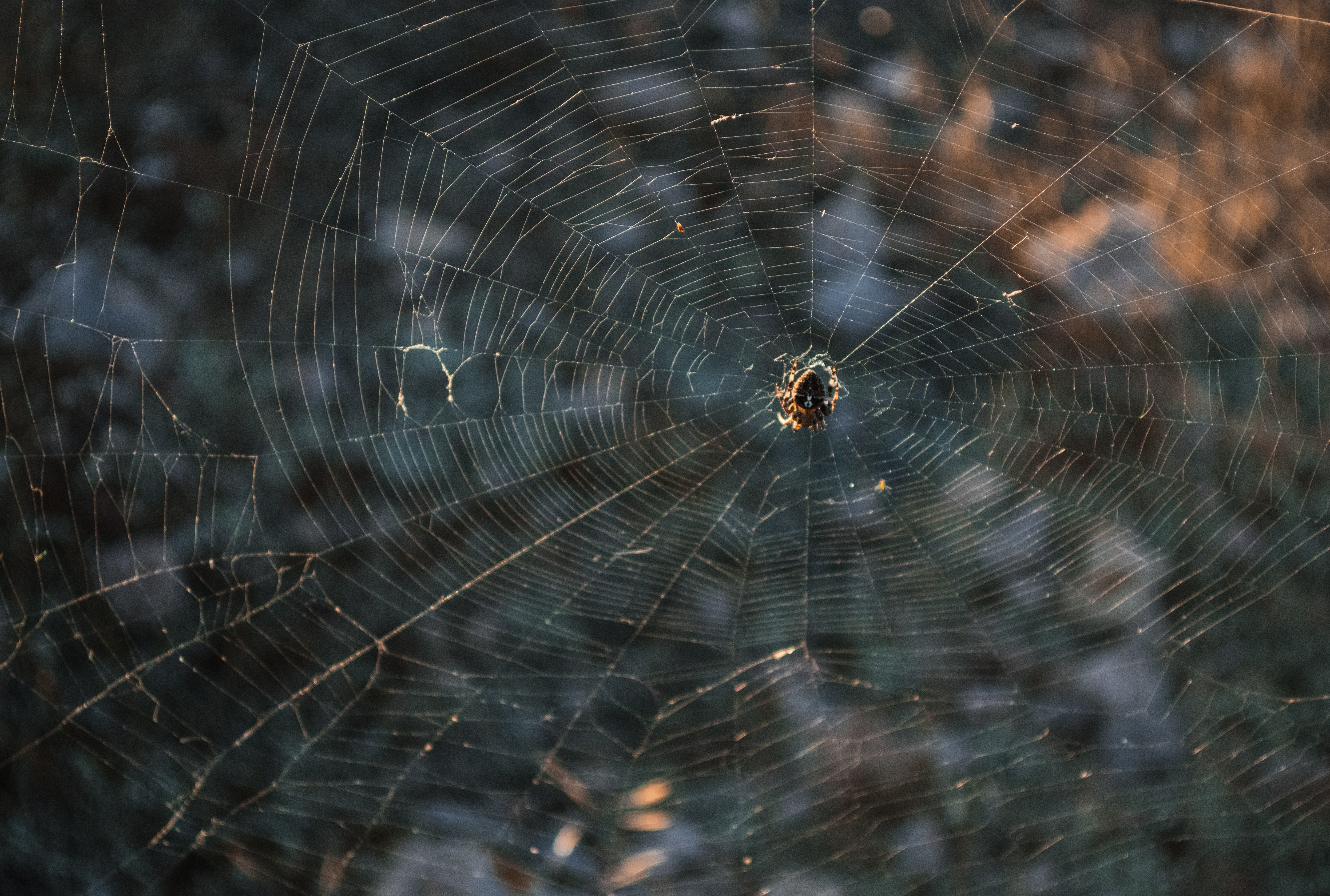 selective focus photography of spider on web