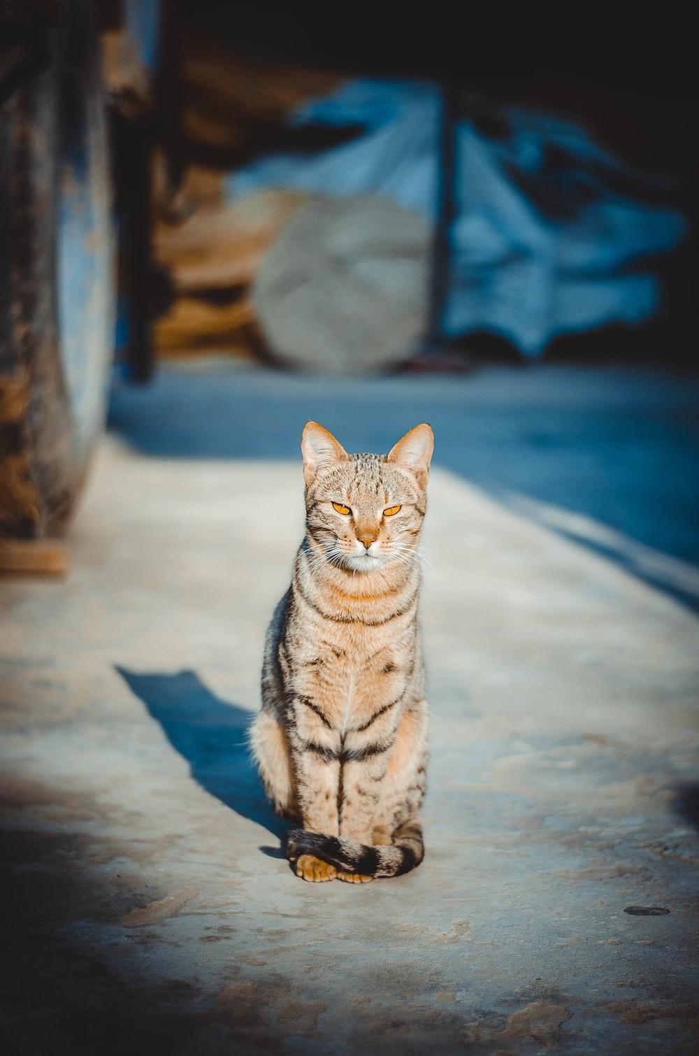 cat on pavement
