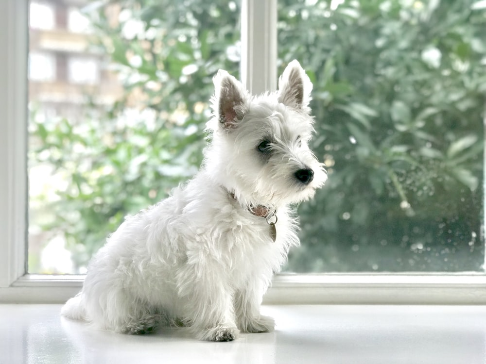 500 White Dog Pictures Hd Free Images On Unsplash