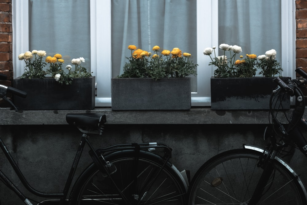 two black bikes near flowers with pots