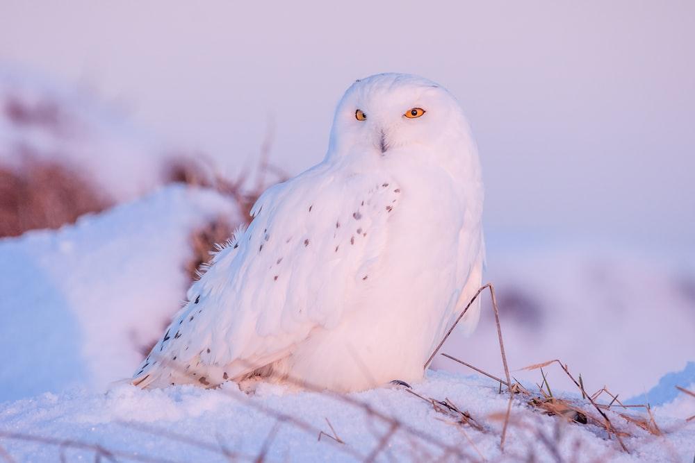 closeup photography of white owl on snow