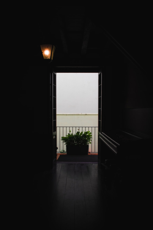 plant near door way
