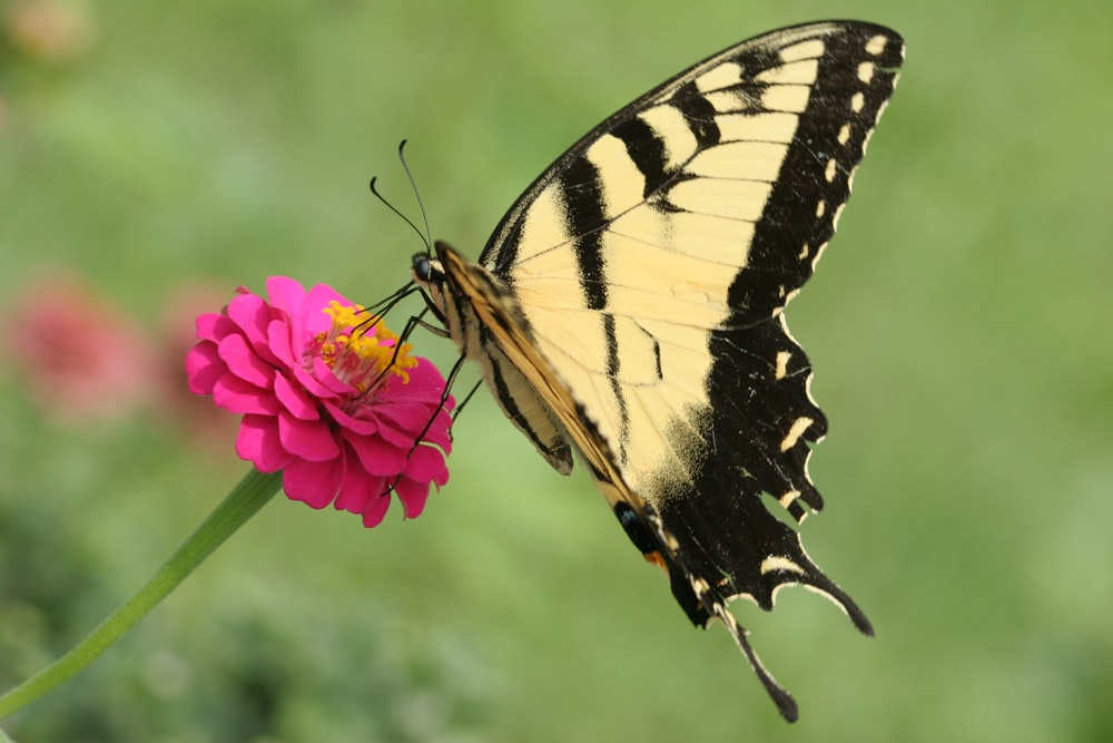 close-up photography of white-and-black butterfly