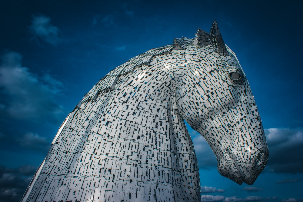 gray horse under blue sky