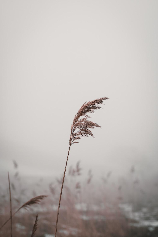 macro photography of brown wheat