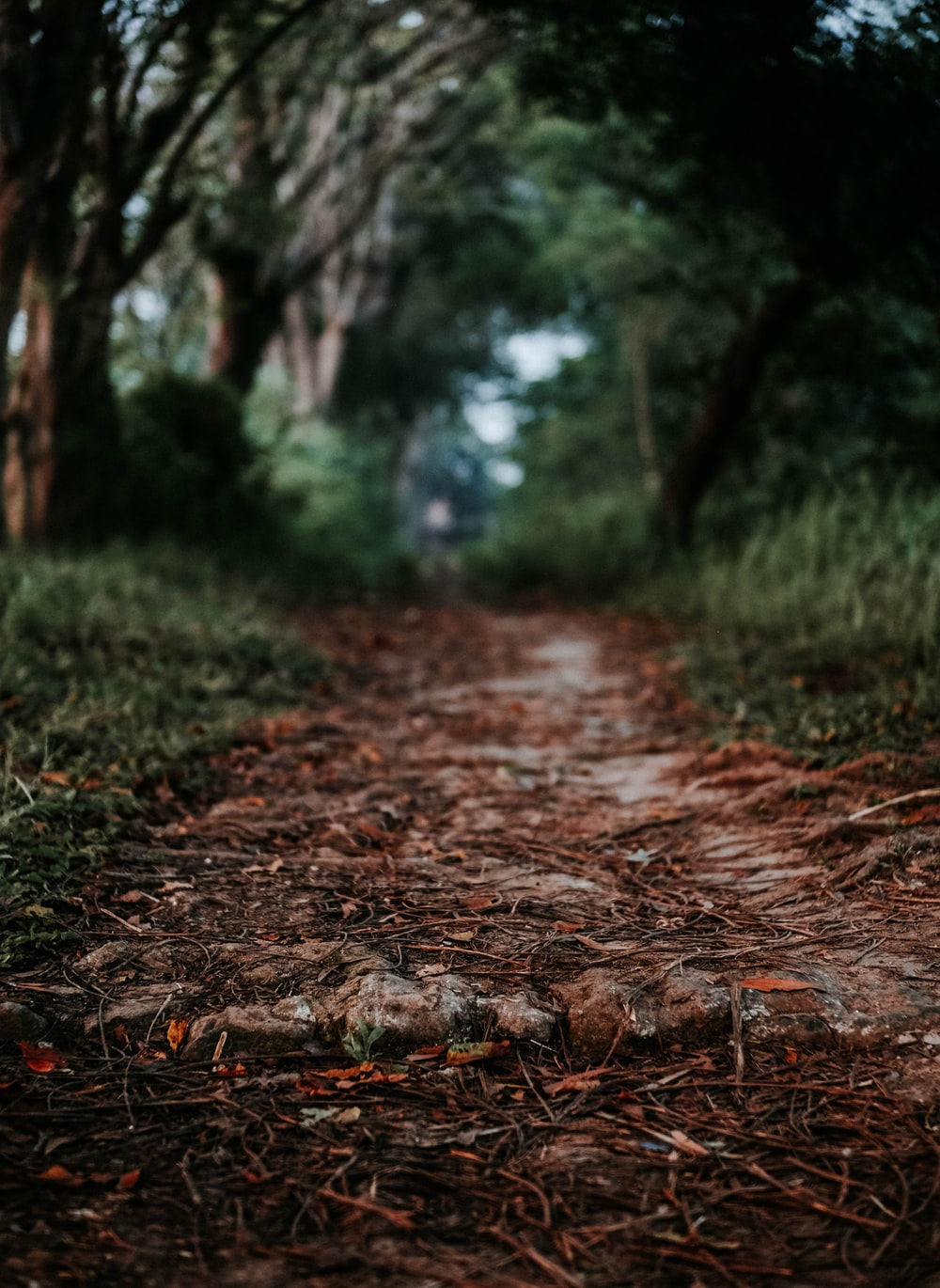 pathway in forest