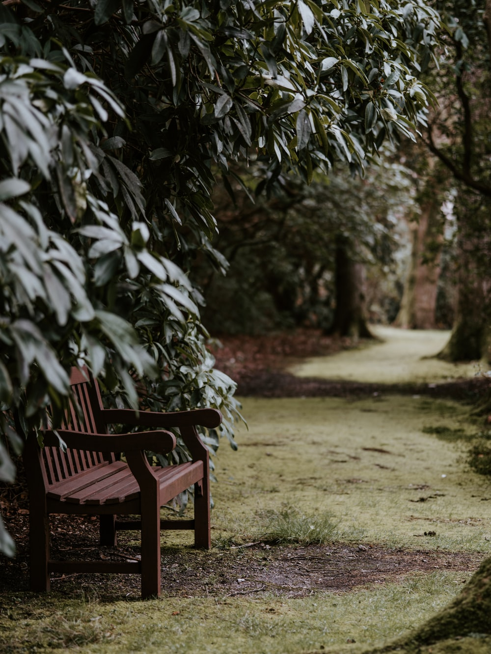 brown wooden bench chair in the park