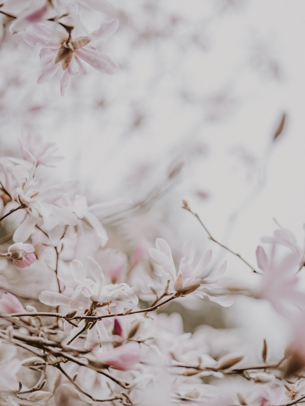 white pink petaled flowers