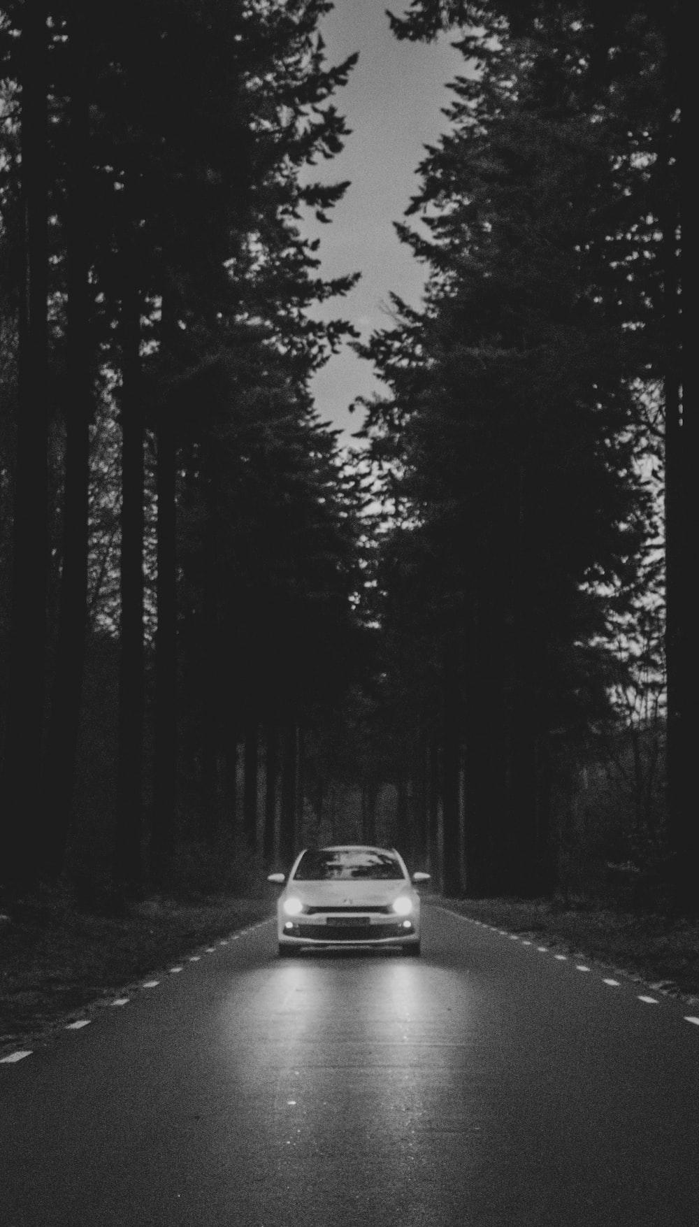 car passing through road between trees