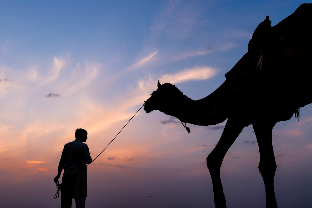 silhouette photography of person and camel