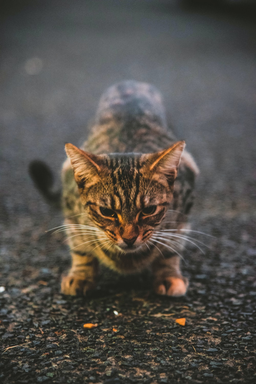 gray cat on ground