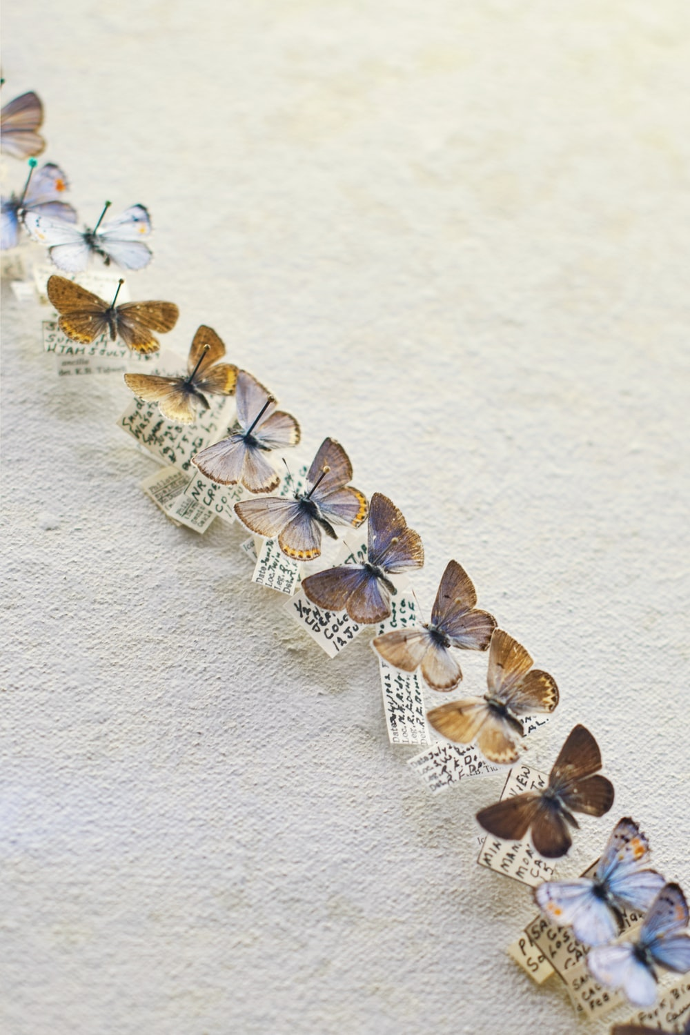 brown butterfly decors on wall