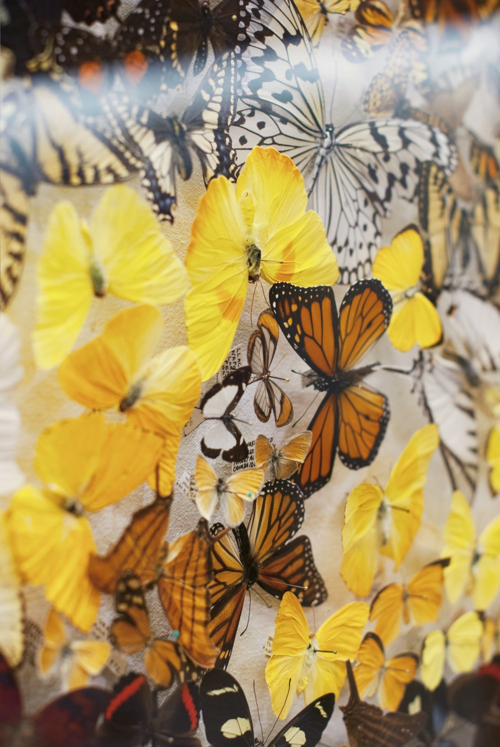 assorted-color butterfly graphic textile
