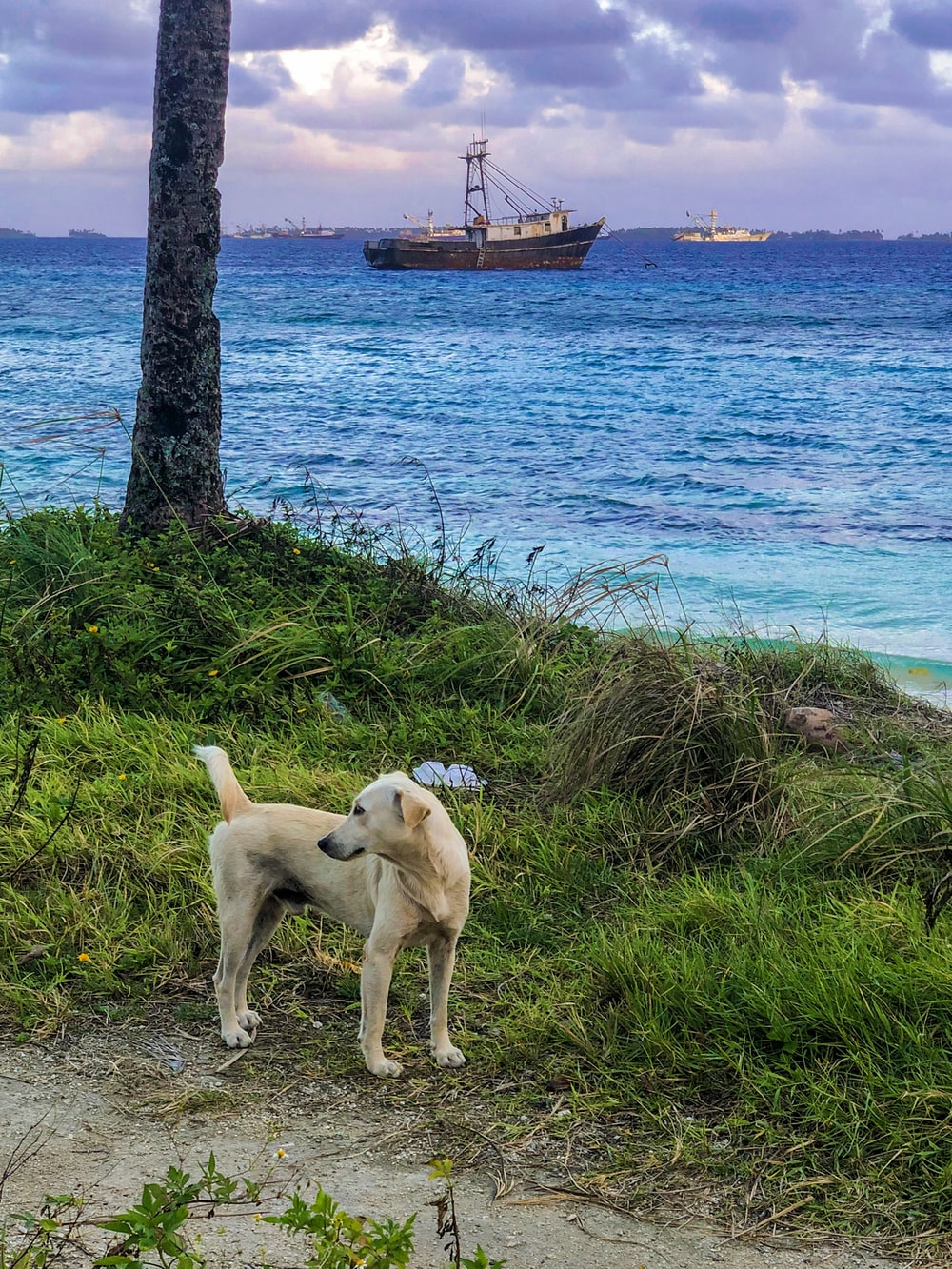 pet dog beside tree