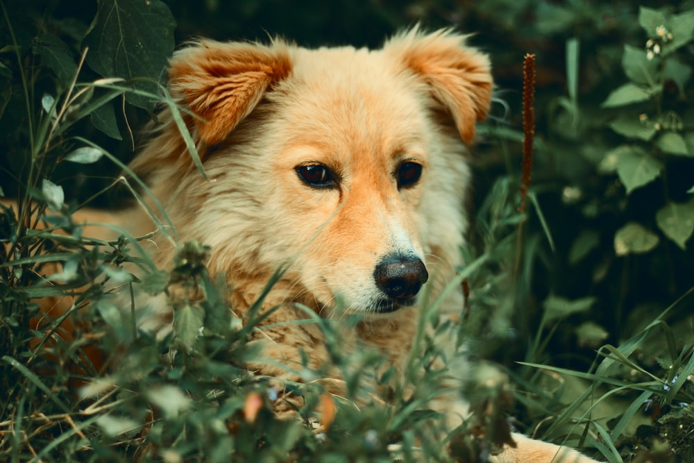 dog surrounded by leaves