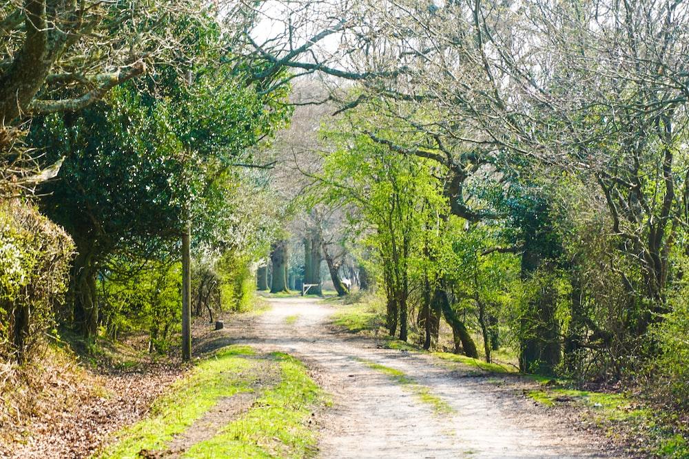 rough road between green trees