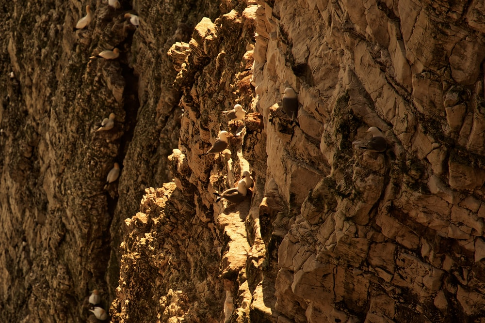 selective focus photography of brown cliff during daytime