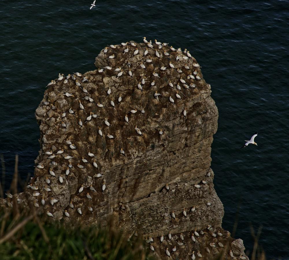 flock of birds near sea