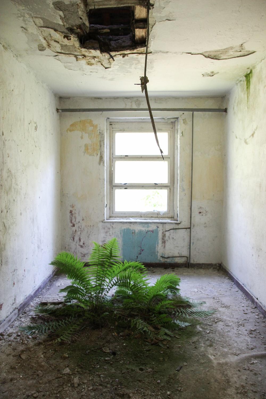 green-leafed plant inside room