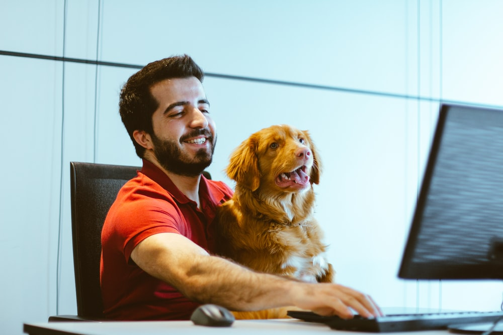 dog sitting on man's lap while using computer