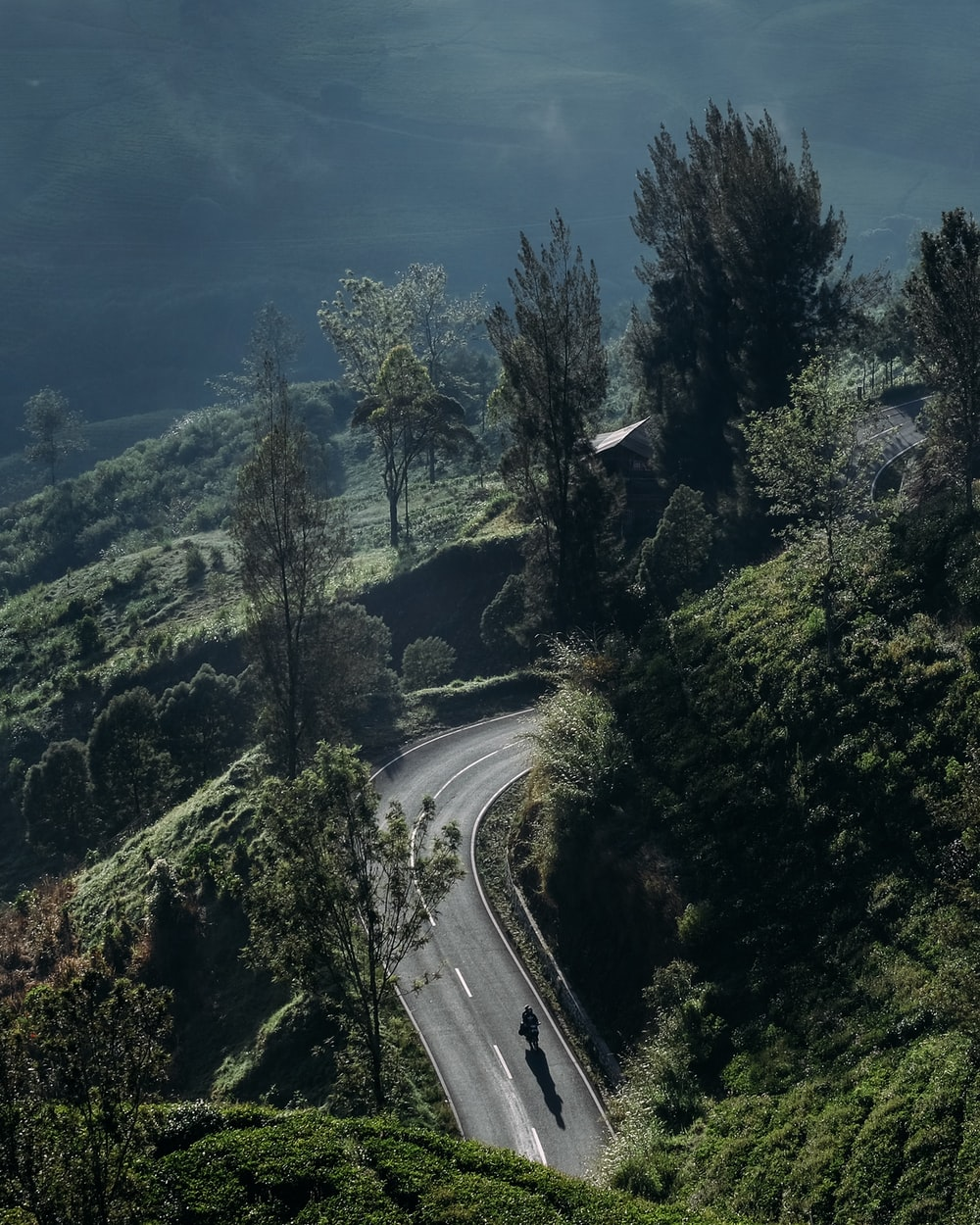 green trees and curved road