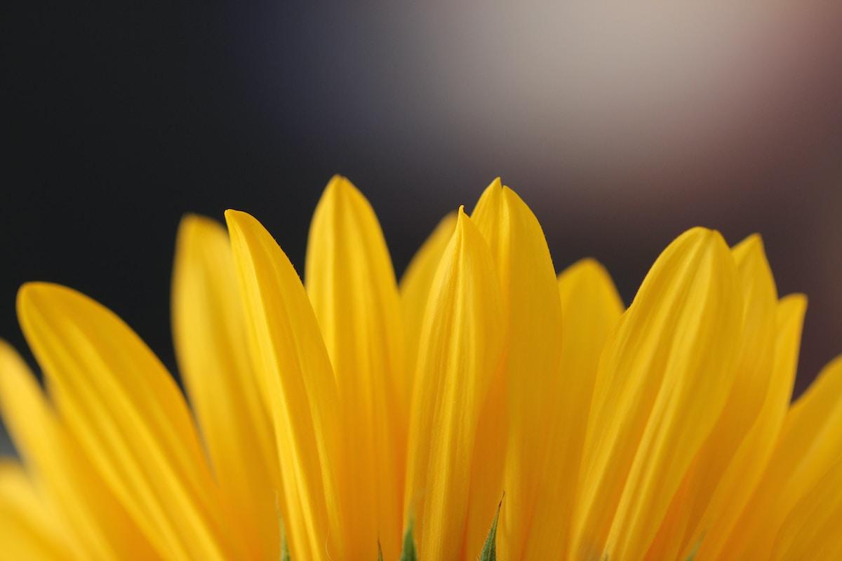 Airpro flower power