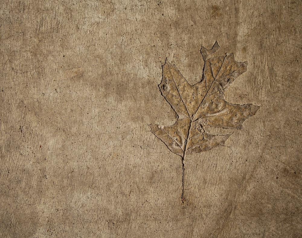 brown leaf illustration