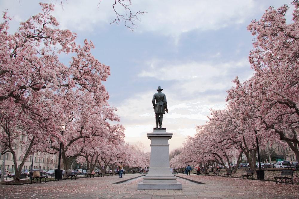 man standing on pedestal near cherry blossom
