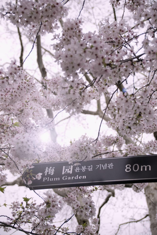 plum garden 80m signage