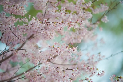 focus photography of pink tree
