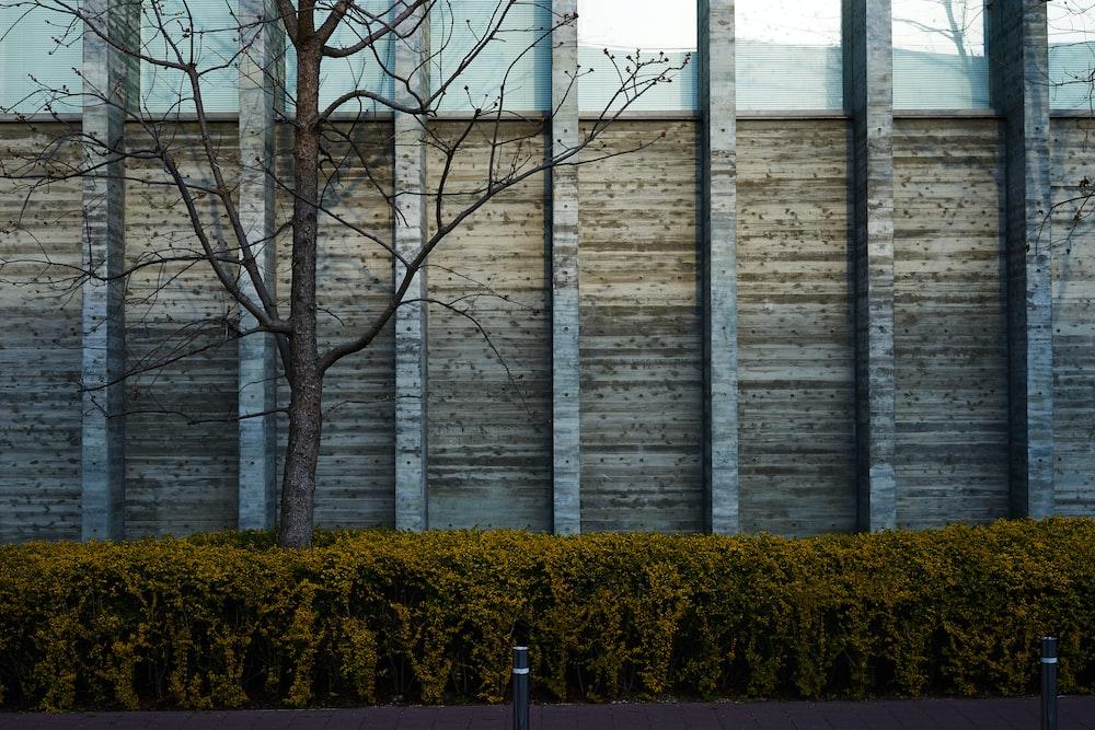 brown trees near brown wall