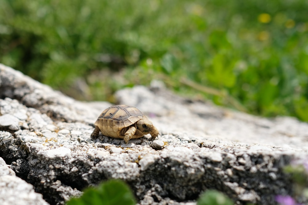 selective focus photo of brown tortoise