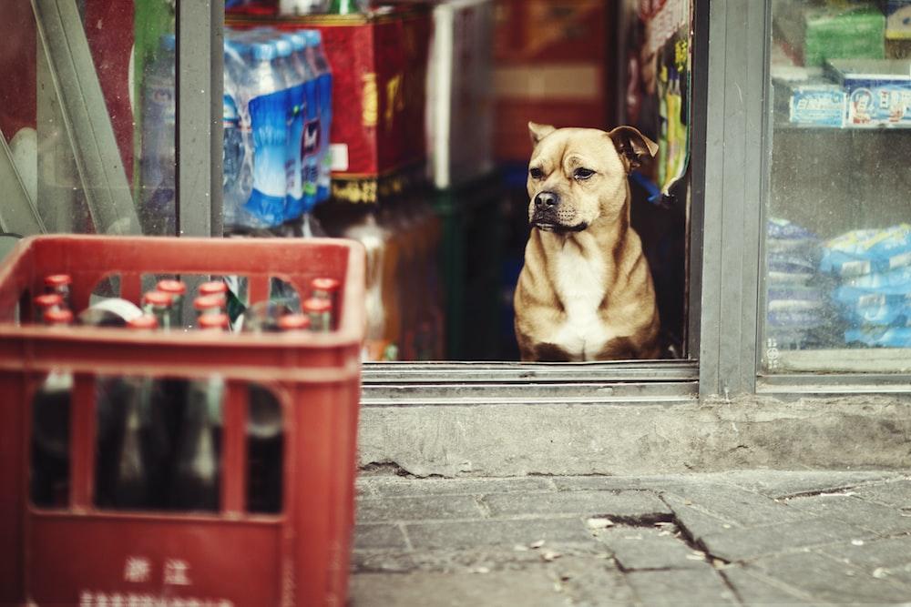 shallow focus photo of short-coated dog
