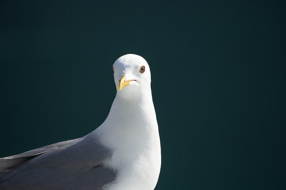 white and gray bird