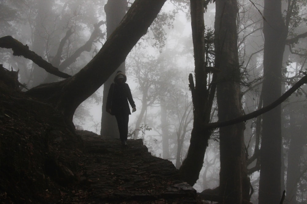 grayscale photography of person walking under thee tree