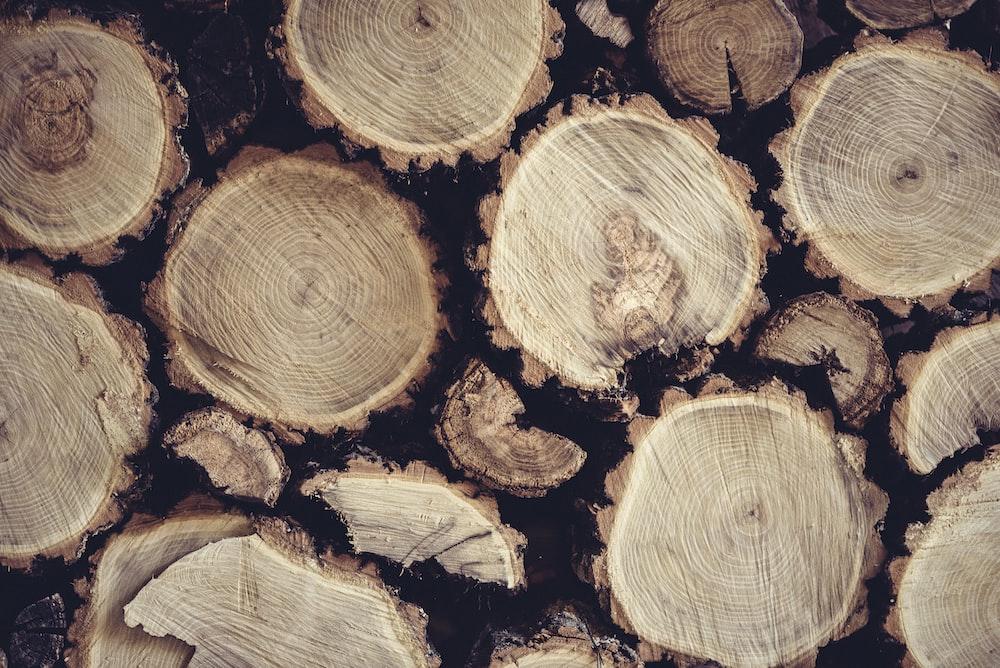 pile of tree log