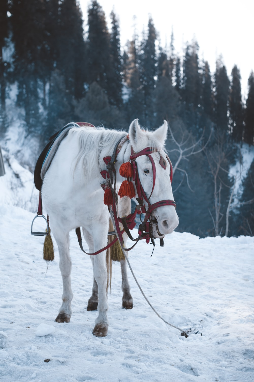 white horse on snow