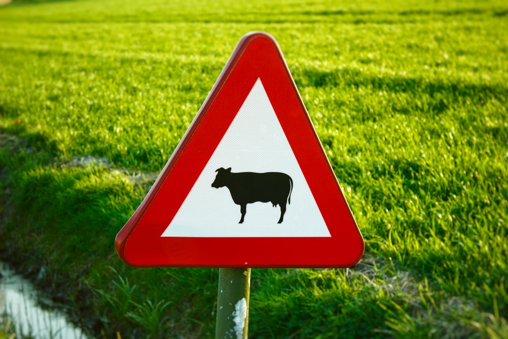 white and red cattle crossing sign close-up photography