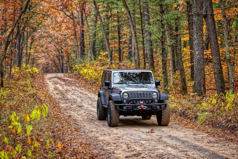 gray Jeep Wrangler near woods