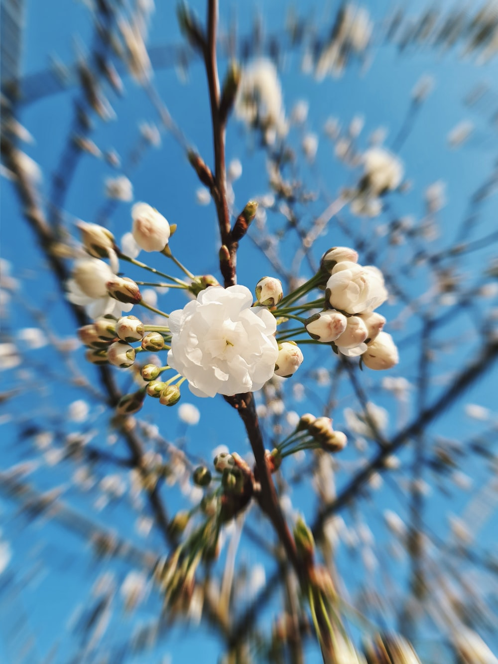 white petaled flower