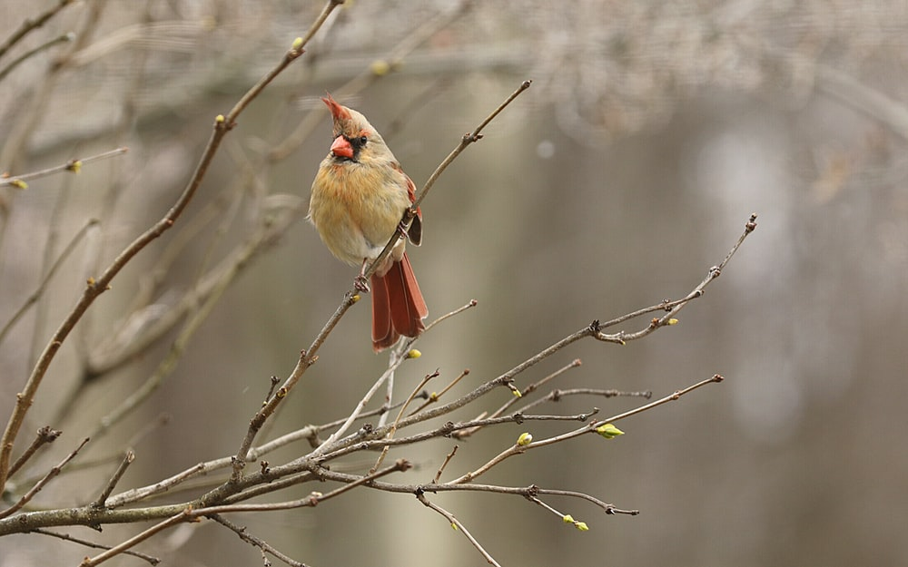red and gray bird on tree