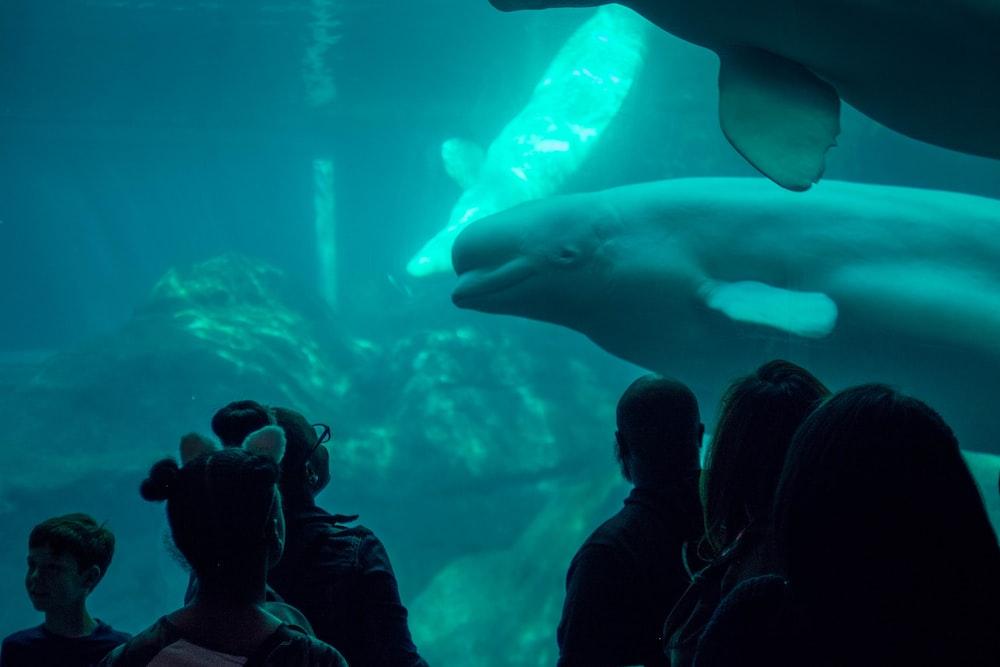 people watching sea creature inside under water museum