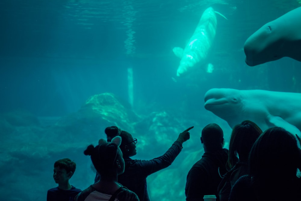 person standing in front of aquarium watching whales