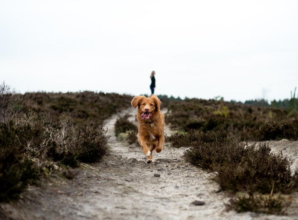 running brown dog on grey pathway at daytime